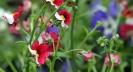 Gartenbuch_19_1