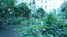 Willkommens-Kultur-Garten Spandau _5
